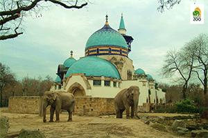 Elefántok a Budapesti Állatkertben