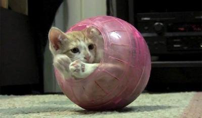 Folyékony macska